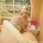 WACCA池袋の猫専門店「necosekai」に行ってきました