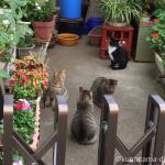 住宅街の猫天国