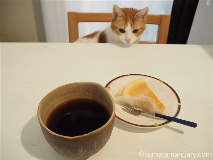 コーヒーとチーズケーキと猫