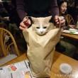 紙袋に入ったチーちゃん