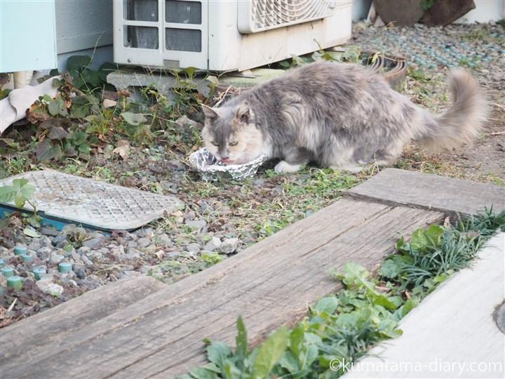 パステル三毛猫1