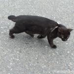 首にリボンを巻いたオシャレな黒猫さん