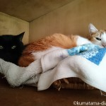 天袋のかごで寝る2匹の猫