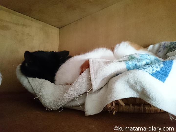 天袋のかごで寝る2匹