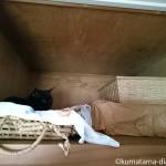 天袋に登って行く猫【動画】