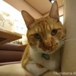 巣鴨の甘味処「甘露七福神」の看板猫サブちゃん