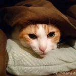 「冷えとり健康法」を始めた私と猫の湯たんぽ争奪戦
