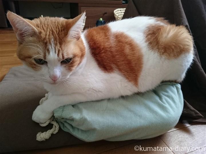 クッションの上に置いた湯たんぽに乗る猫