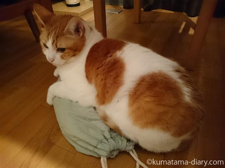床の上に置いた湯たんぽに乗る猫