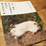 「キャット・ウォッチング1 なぜ、猫はあなたを見ると仰向けに転がるのか?」を読みました