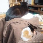 2匹同時に使えるこたつ【猫の寒さ対策】