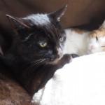 湯たんぽをシェアする猫たち