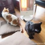 「YAMAZEN 遠赤外線カーボンヒーター」で暖を取る猫たち