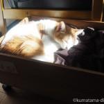 湯たんぽを入れたワインの木箱で眠る猫たち