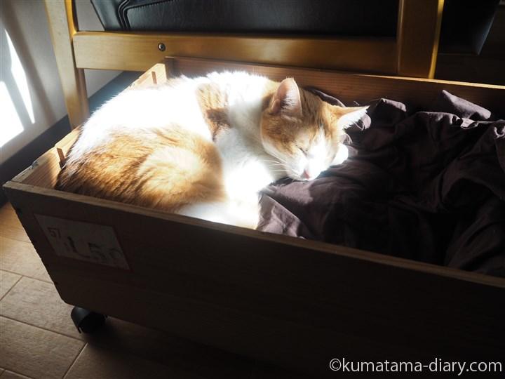 木箱で眠るたまき
