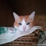 天袋のかごにあごのせする猫