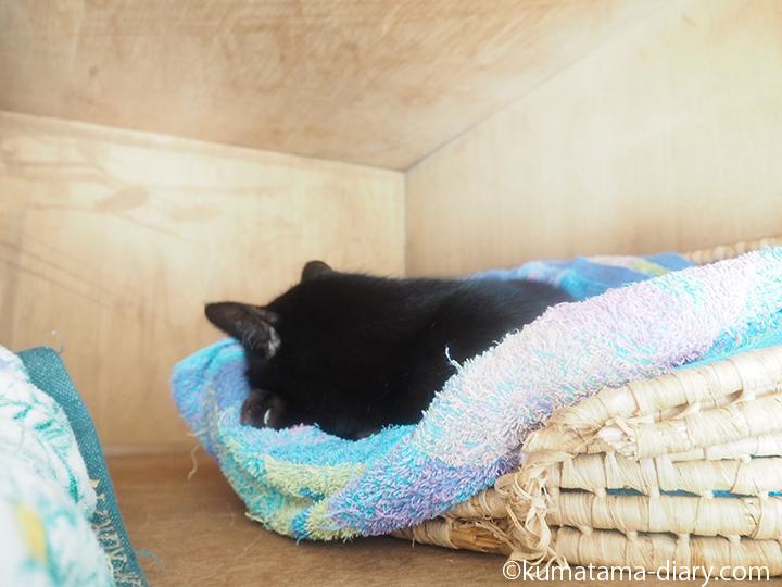 天袋のかごで寝るくま
