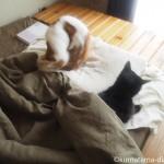 体調の悪い飼い主に添い寝してくれる2匹の猫