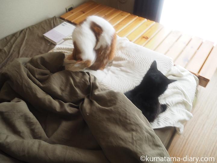 ベッドのくまとたまき