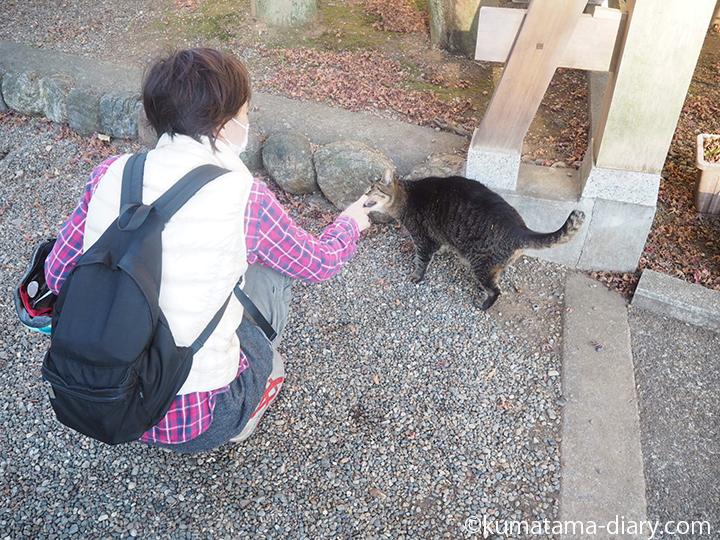 人懐こいキジトラ猫