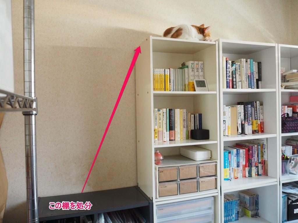 本棚の上のたまき