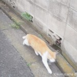 猫に「こんにちは」と挨拶して逃げられました