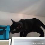 高いところを探検する猫