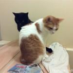 猫と一緒のお風呂タイムが復活♪
