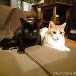 石油ファンヒーターの前の猫たち【寒さ対策】