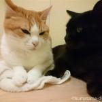 風呂場の猫たち