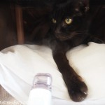 陶器の湯たんぽを使うなら、ペットの「夢こたつ」でなくてもよいかも?!