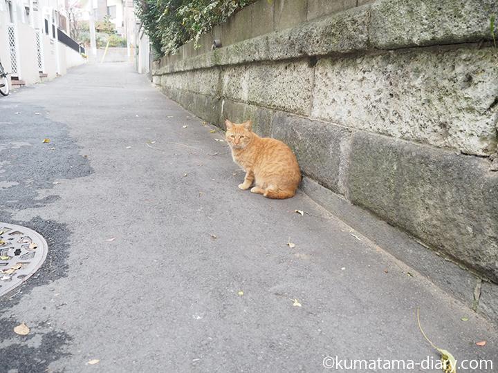 茶トラ猫さん発見