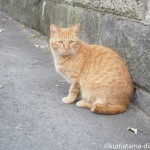 浦和で見かけたタレ目の茶トラ猫さん