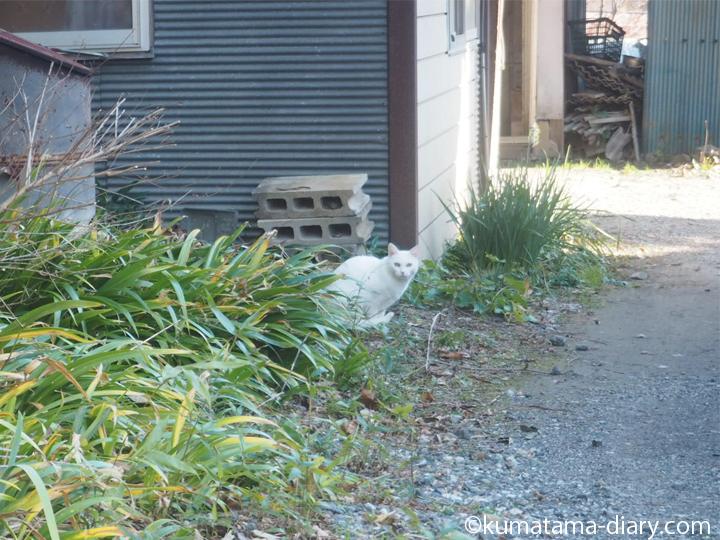 日高白猫さん