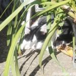 三宿の猫さんたち【ネコ散歩】
