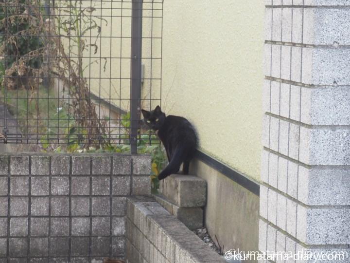 三宿の黒猫さん3