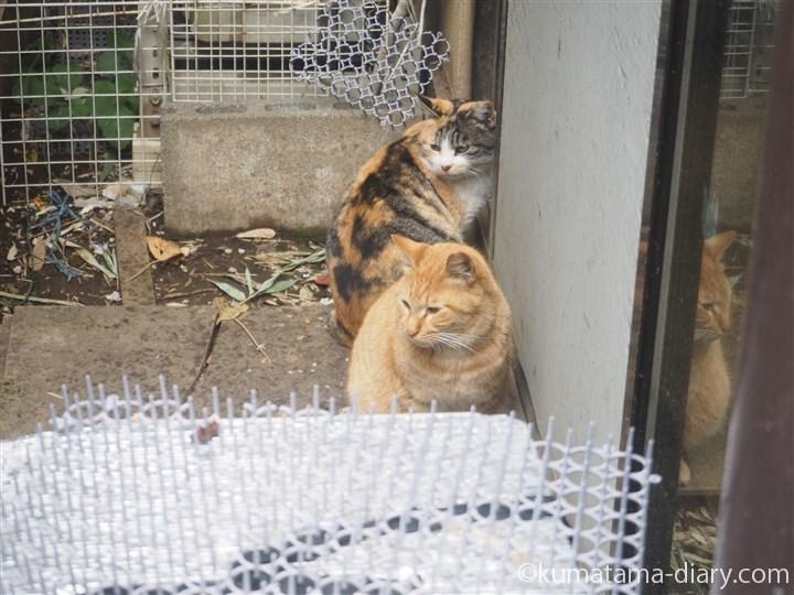 三毛猫と茶トラ