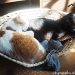 「メイズ製ペット用ベッド」で一緒にひなたぼっこする猫たち