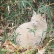 茶トラ猫横顔