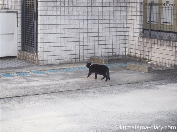 三宿の黒猫さん1