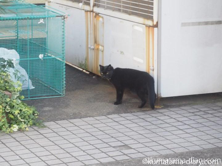 三宿の黒猫さん2