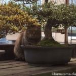 入間市にある猫を愛する工務店
