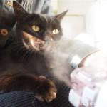 「オムロン メッシュ式ネブライザ NE-U22」で猫が吸入しているところ