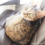 狭山市の保護猫カフェ「funnycat(ファニーキャット)」へ行ってきました