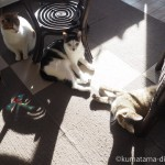 狭山市の保護猫カフェ「funnycat(ファニーキャット)」で3匹の猫さんと遊びました