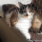 狭山市の保護猫カフェ「funnycat(ファニーキャット)」でひなたぼっこする猫さんたち