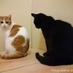 お風呂のフタの上で壁際に座る猫