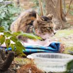 「東池袋中央公園」の人懐っこい猫さん達