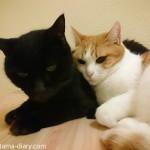 お風呂のフタの上で寄り添う2匹の猫