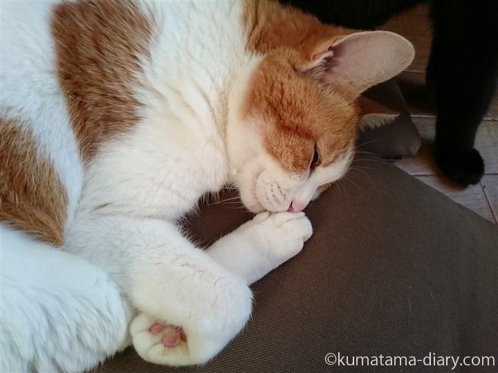 足に キスしながら眠るたまき